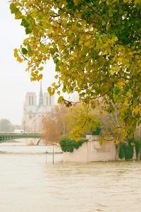 Notre Dame 2 by Carina Okula