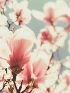 Paris Petals 1 by Carina Okula