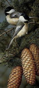 Chickadees by Carl Brenders