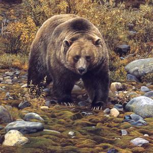 Trailblazer - Grizzly Bear (detail) by Carl Brenders