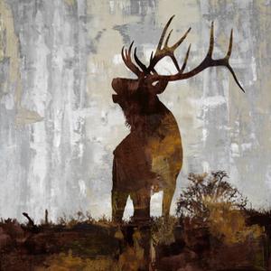 Elk by Carl Colburn