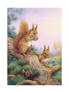 Pair of Red Squirrels on a Scottish Pine by Carl Donner