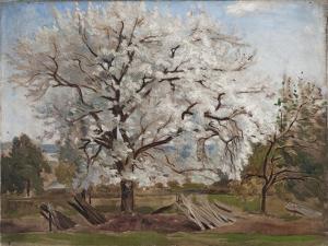 Apple Tree in Blossom by Carl Fredrik Hill