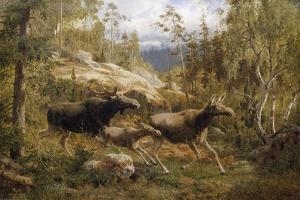 A Family of Moose by Carl Henrik Bogh