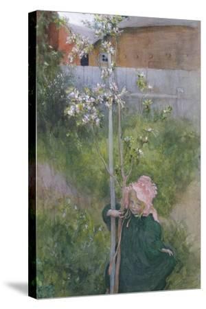 Apple Blossom (Appelblom), 1894