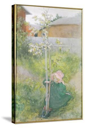 Appleblossom, 1894