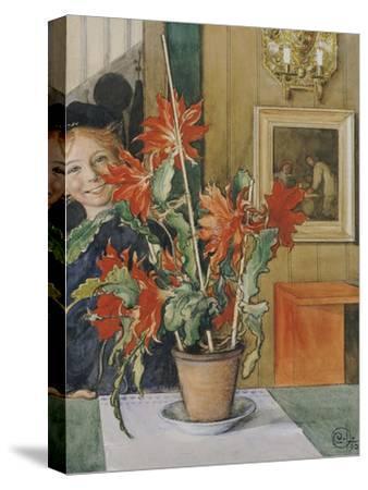 Brita's Cactus, 1904
