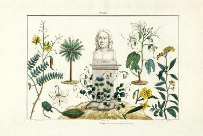 Carl Von Linnée, 1833-39--Giclee Print