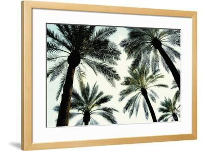 Palm One