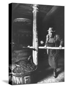 Man Using Old Wine Press at Vaux En Beauiplais Vineyard by Carlo Bavagnoli