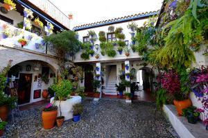 Courtyard of Casa Patio, Cordoba, Andalucia, Spain by Carlo Morucchio