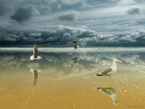 Seagulls on the Beach by Carlos Casamayor