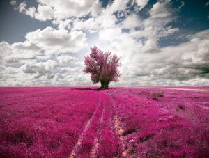 Tree Dreamscape by carloscastilla