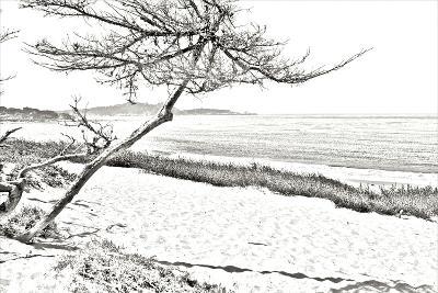 Carmel Beach III-Alan Hausenflock-Photographic Print