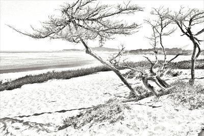 Carmel Beach IV-Alan Hausenflock-Photographic Print