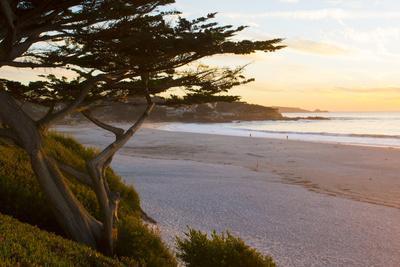 https://imgc.artprintimages.com/img/print/carmel-california-cypress-tree-and-waves-at-sunset-on-ocean-pebble-beach_u-l-q1d024o0.jpg?p=0