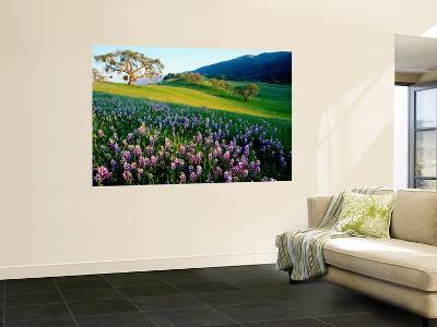 Carmel Valley in Spring-Douglas Steakley-Giant Art Print