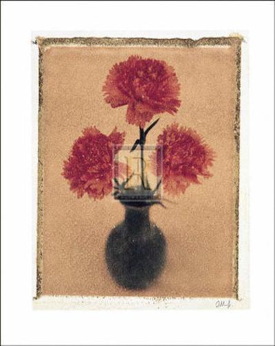 Carnations-Scott Morrish-Art Print