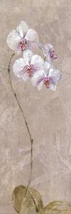 Contemporary Orchid I - Focus by Carney