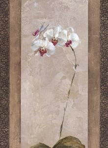 Contemporary Orchid II by Carney