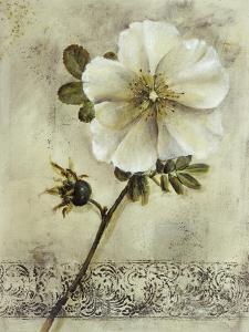 Floral Blush I by Carney