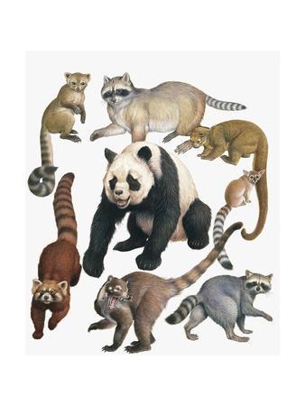 https://imgc.artprintimages.com/img/print/carnivorous-mammals_u-l-pvs7ez0.jpg?p=0