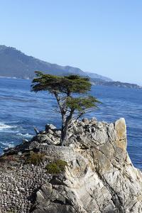 Lone Cypress on the 17-Mile Drive, Monterey Peninsula, California by Carol Highsmith