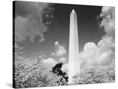 Washington Monument and cherry trees, Washington, D.C. - Black&W