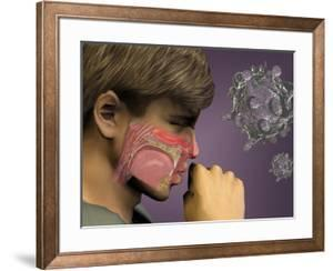 Artist's Concept of the Rhinovirus Which Causes the Common Cold by Carol & Mike Werner