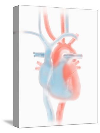 Biomedical Illustration of a Stylized Human Heart