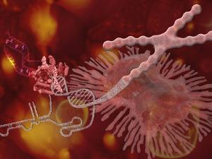 Biomedical Illustration of the Immortality Enzyme by Carol & Mike Werner