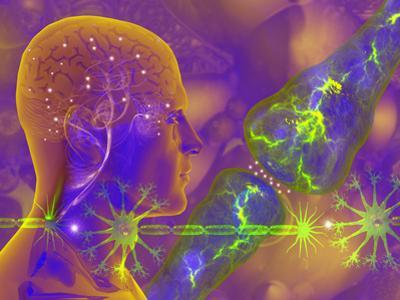 Concept of Electrical Activity in Neurons Electrical Impulses are Carried across the Synapse by Carol & Mike Werner