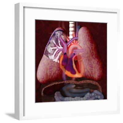 Human Cardiovascular System Illustration