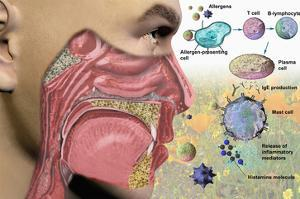 Illustration of the Human Head Showing the Mouth, Nose, and Throat Illustrating Allergy Symptoms by Carol & Mike Werner