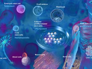 Stem Cell Research by Carol & Mike Werner