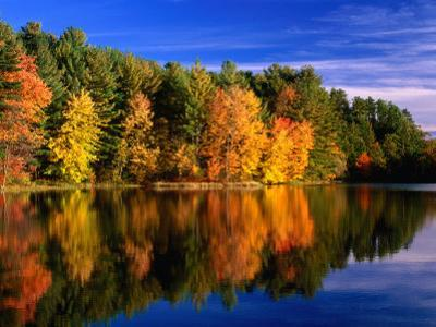 Autumn Trees in New Hampshire, New Hampshire, USA by Carol Polich