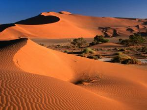 Namib Sand Dunes, Nambia Desert Park, Namib Desert Park, Erongo, Namibia by Carol Polich
