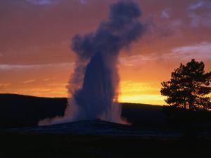 Old Faithful Geyser at Sunset, Yellowstone National Park, USA by Carol Polich