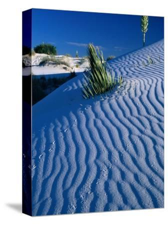 Rippled White Sand Dune with Plants Pushing Through, White Sands National Monument, USA