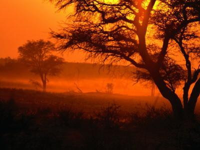 Sunset Over Trees in Park, Kgalagadi Transfrontier Park, South Africa