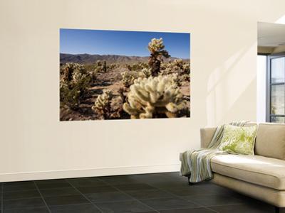 Teddy Bear Cholla Cactus