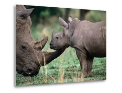 White Rhinceros with Young, Tala Private Game Reserve, Kwazulu-Natal, South Africa