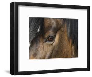 Close Up of Eye of a Paint Mare, Berthoud, Colorado, USA by Carol Walker