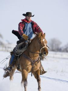 Cowboy Cantering Through Snow on Chestnut Red Dun Quarter Horse Gelding, Berthoud, Colorado, USA by Carol Walker