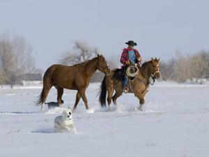 Cowboy Leading Sorrel Quarter Horse Geldings, with Two Mixed Breed Dogs, Longmont, Colorado, USA by Carol Walker