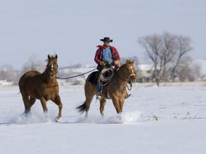 Cowboy Riding Red Dun Quarter Horse Gelding Through Snow, Bethoud, Colorado, USA by Carol Walker