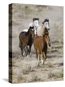 Group of Wild Horses, Cantering Across Sagebrush-Steppe, Adobe Town, Wyoming, USA by Carol Walker