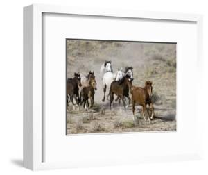 Herd of Wild Horses, Cantering Across Sagebrush-Steppe, Adobe Town, Wyoming, USA by Carol Walker