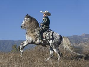 Horseman in Traditional Dress Riding Grey Andalusian Stallion, Ojai, California, USA by Carol Walker