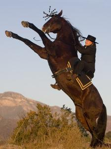 Horsewoman on Rearing Bay Azteca Stallion (Half Andalusian Half Quarter Horse) Ojai, California by Carol Walker